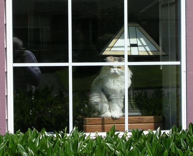 Amber in window