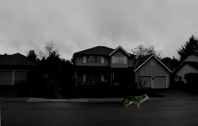 Heb house-coyote