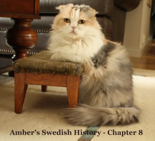 Amber Hist 8