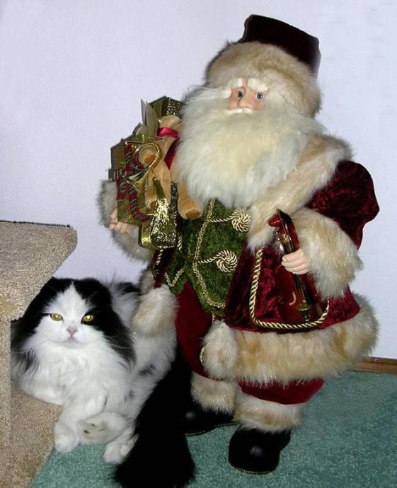 Christmas Kat