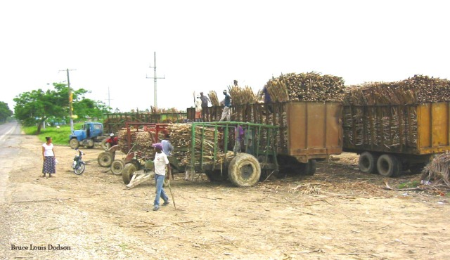 Dominican Republic -  Sugar Cane - Name