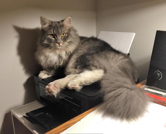 smoth-at-printer-fix